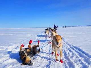 Rookie Iditarod: Koyuk - White Mountain