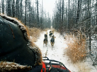 Rookie Iditarod Training: Log 2