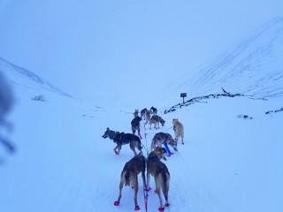 Rookie Iditarod: Finger Lake - Rohn