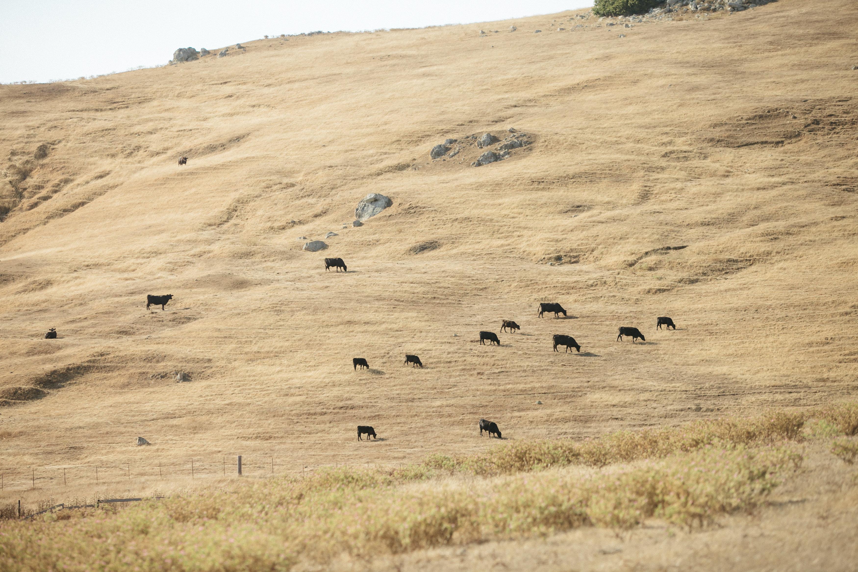 Cow-Track-Ranch-wedding-0322