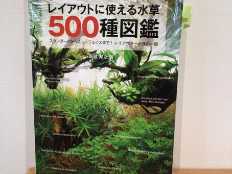 水草の世界