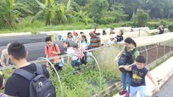 Comfort Organic Farm (8)
