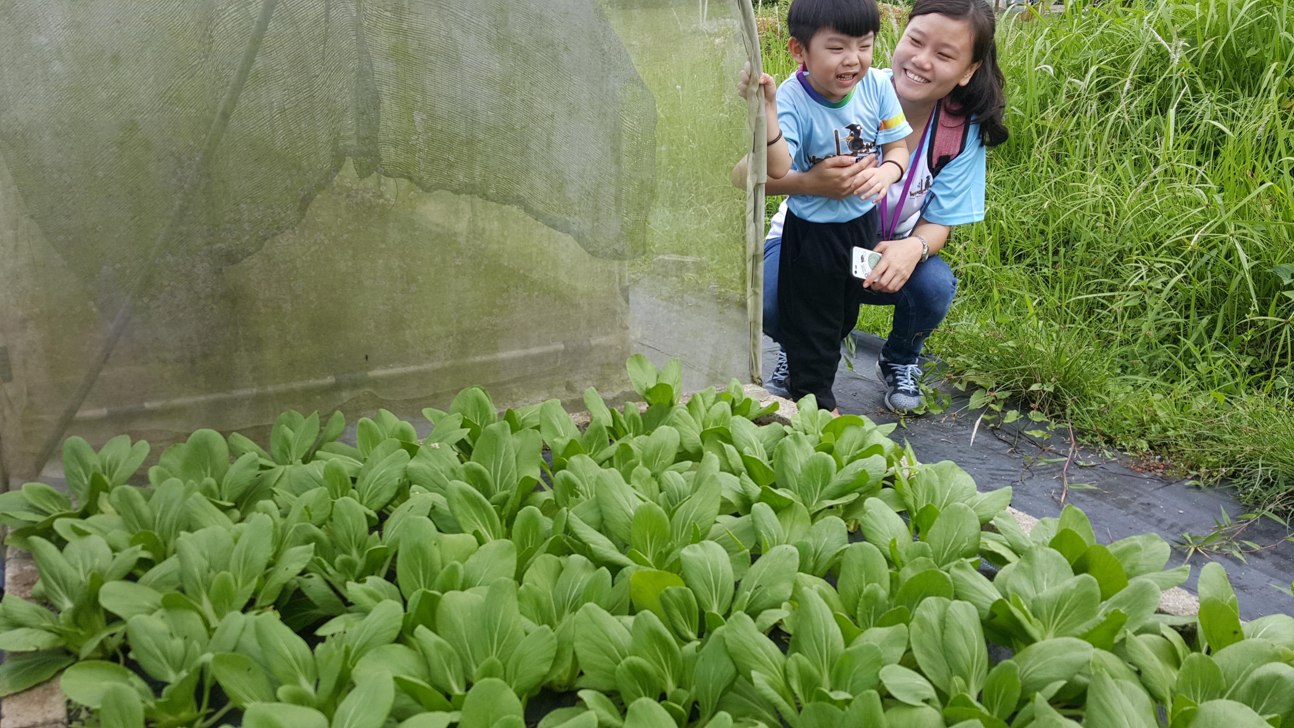 Comfort Organic Farm (5)
