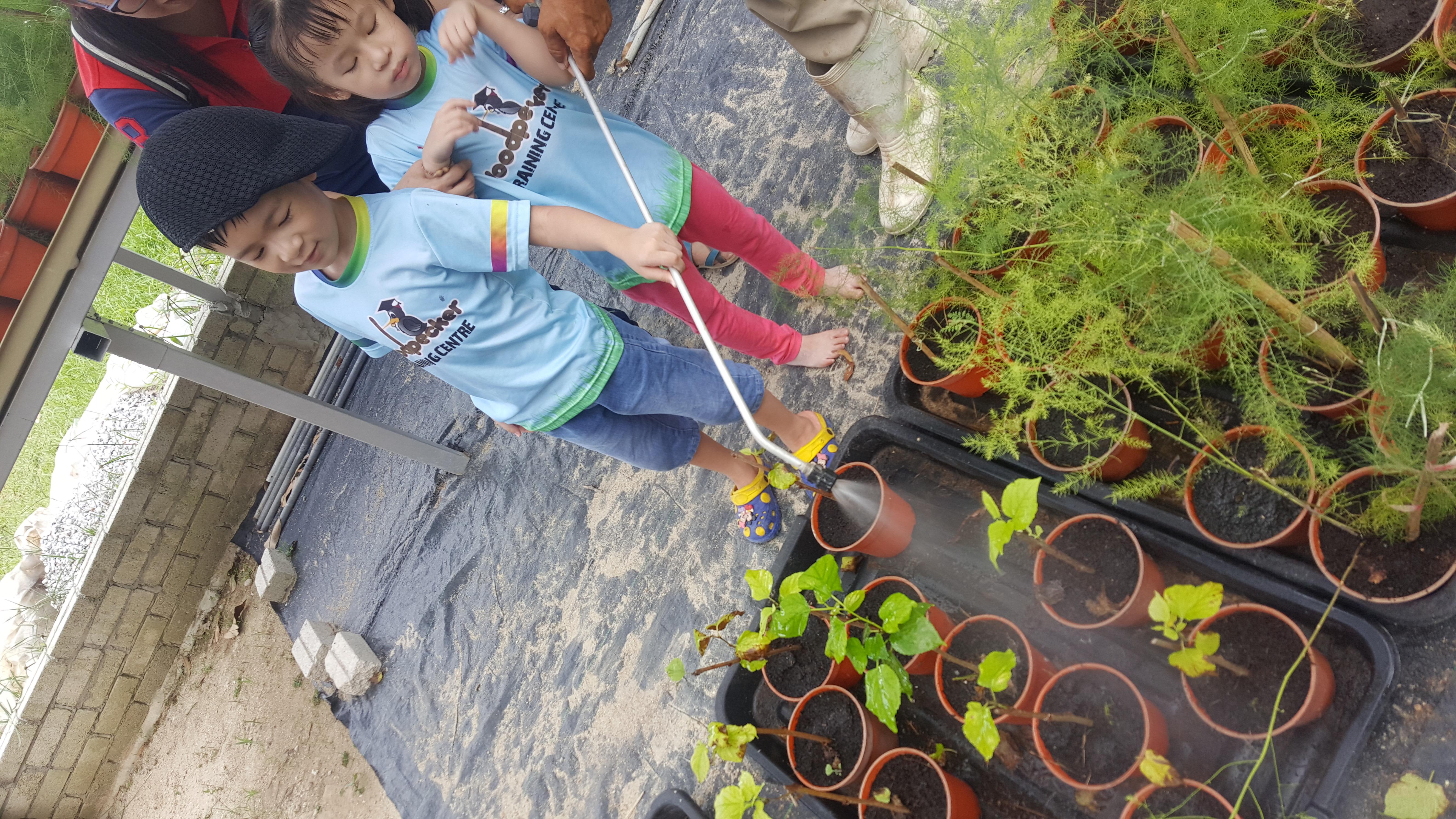 Comfort Organic Farm (14)