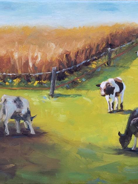 Cows by the Cornfield