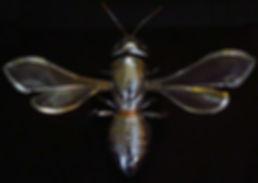 Big Silver Bee.jpg