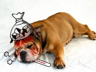歯磨きで風邪やインフルエンザ予防!