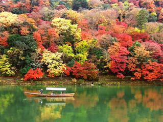 季節のお任せコース「秋メニュー」はじめました