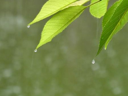 梅雨の養生について2
