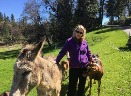 August Sustainability Spotlight Hero- Christa Saracco
