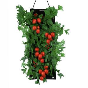 Organic+Hanging+Roma+Tomato+Growing+Kit.