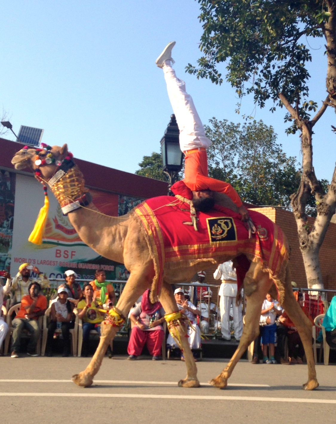 camel yoga.JPG
