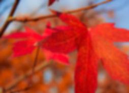 AutumnLeafs.jpg