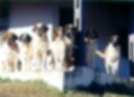 cães-chácara.jpg