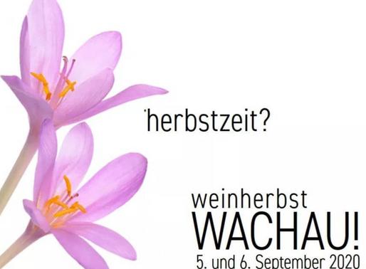 Wachauer Weinherbst