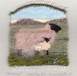Hill Sheep.jpg