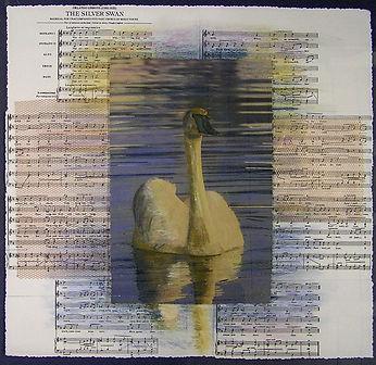Silver-Swan.jpg