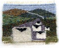 sheepish-stare.jpg