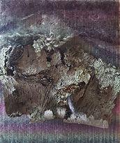 Lichen-tapestry.jpg