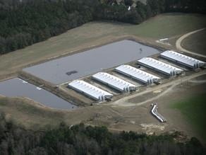 Inside North Carolina's Latest Blockbuster Hog Trial
