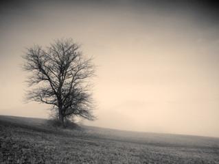 Selected Poems by Robert Beveridge