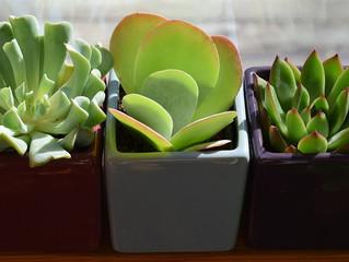 The Wonder of Plants