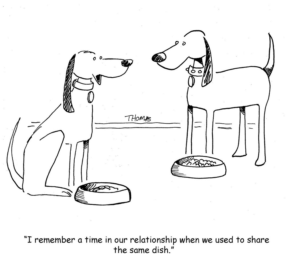 Dog Same Dish