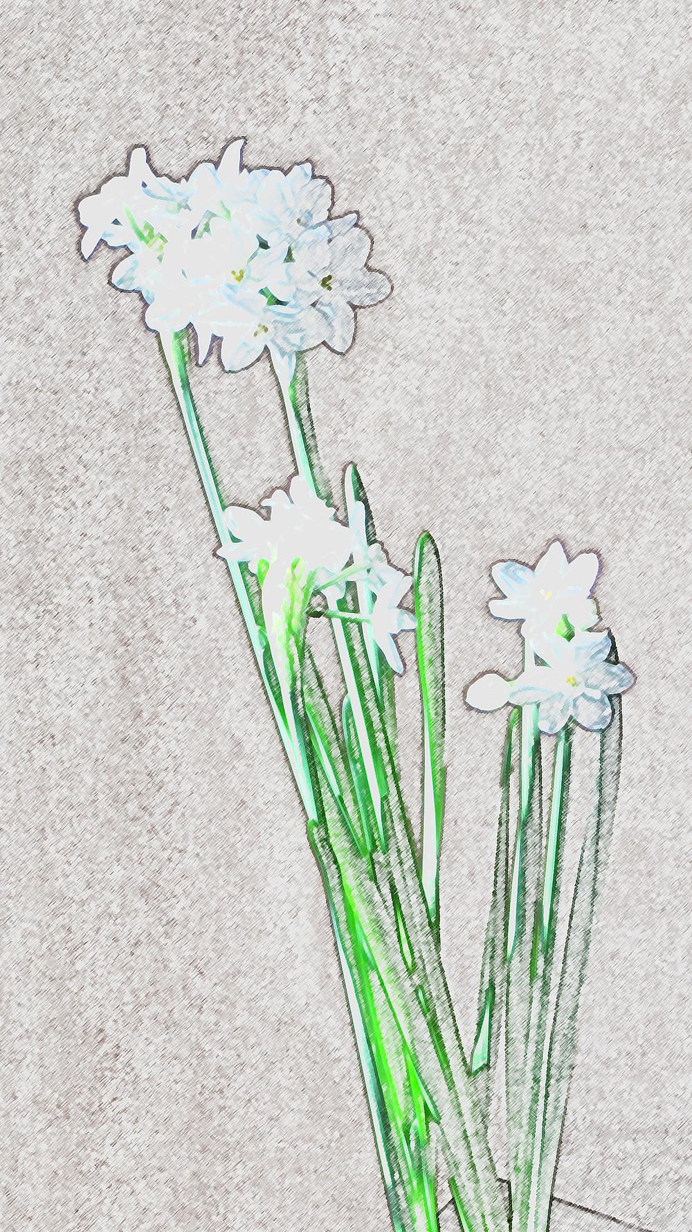 Pencil Sketch of Flowers