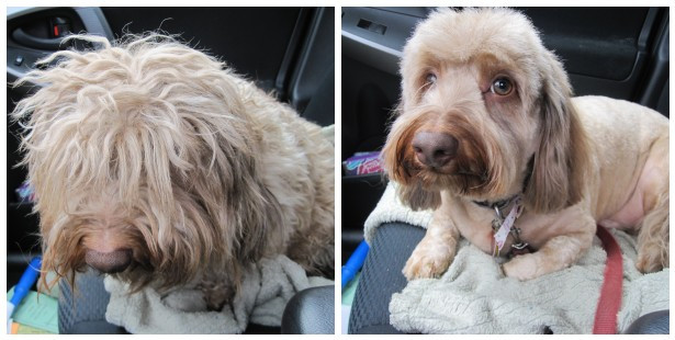 Dog Before and After