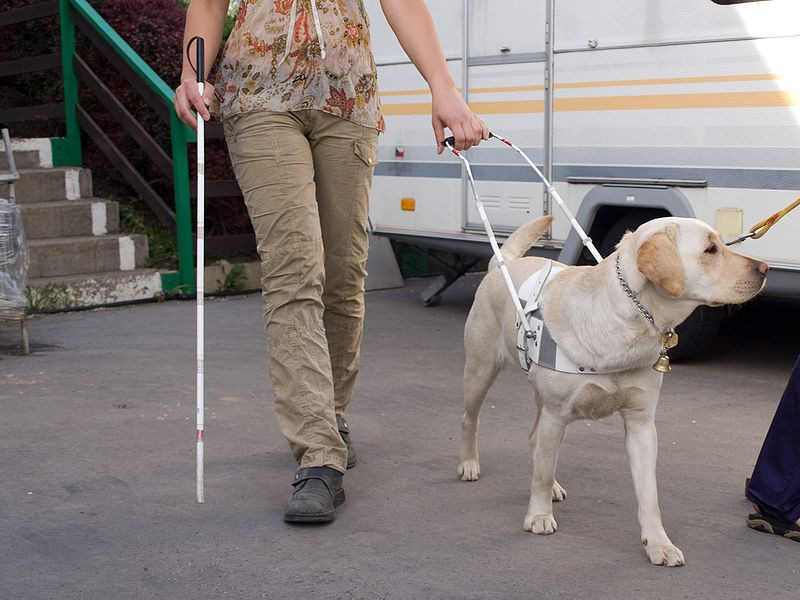 guide dog and blind woman with cane