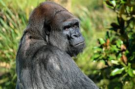 The Sharing Economy: Road to Utopia or Yet Another Hilarious Great Ape Experiment?