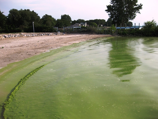 Deadly Blooms: Algae Blooms in Beaches