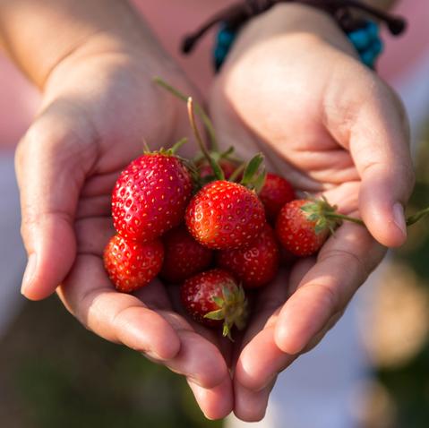 Fruit Farm Visit