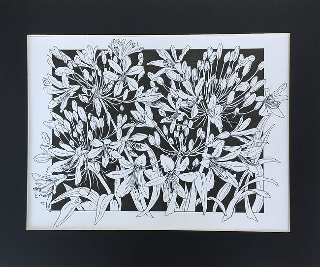 Agapanthus in monochrome