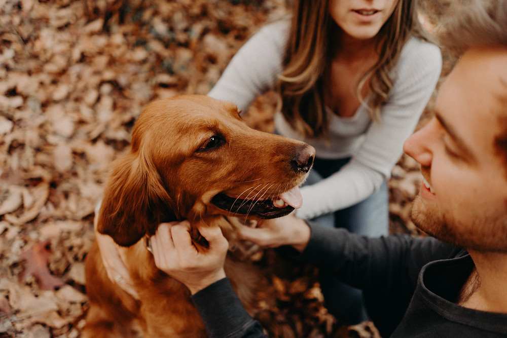 Couple playing with their dog in a fall photo session