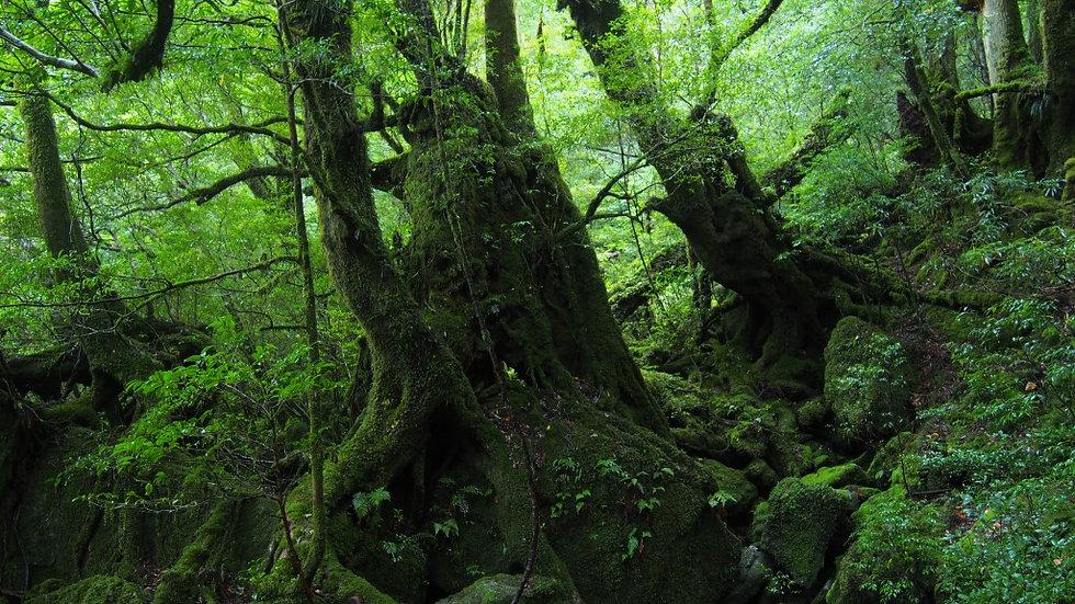 苔むした森