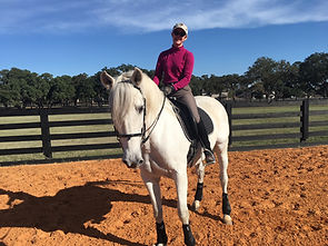 Absolute Amore PRE Gelding Sold by Exclusive Dressae Imports