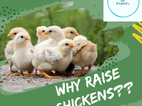 Why Raise Backyard Chickens!
