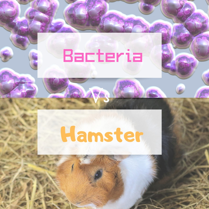 Hamsters Versus Bacteria