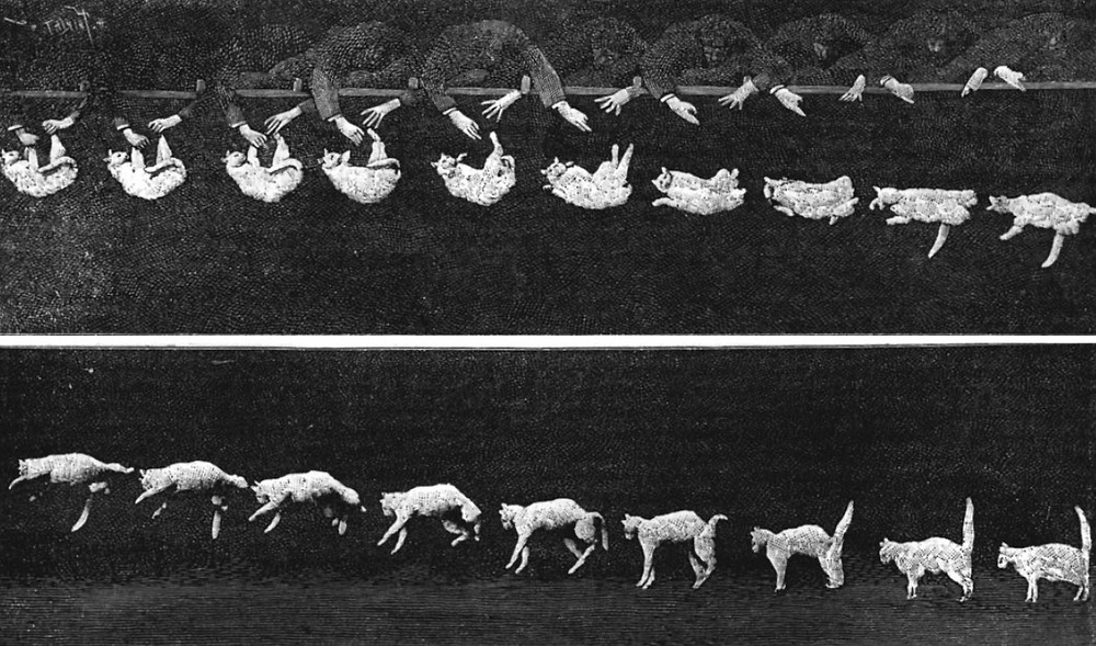 Images of a falling cat which appeared in the journal Nature in 1894, captured in a chronophotography by Étienne-Jules Marey.