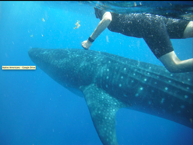 The Case of the Whale Shark Party with Rafael de la Parra