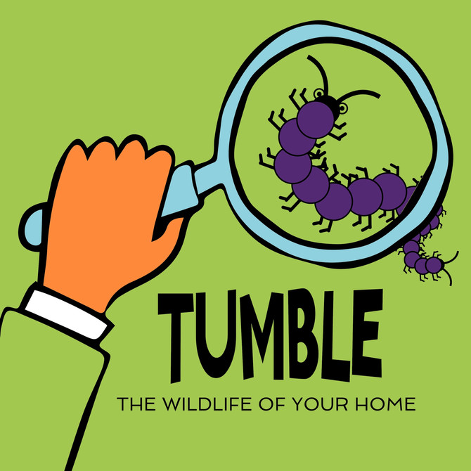 Join Tumble's The Wildlife Of Your Home Podcourse!