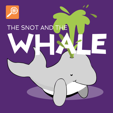 The Snot and The Whale