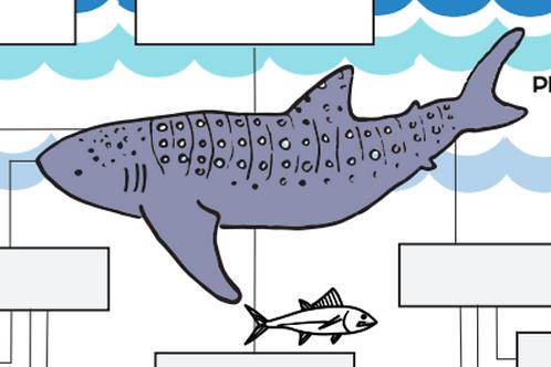 Whale Shark Food Web Worksheet