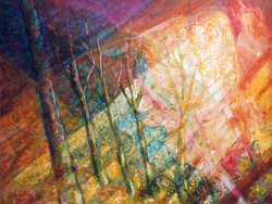 licht op bomen / light on trees