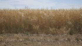 harvest scene12.jpg