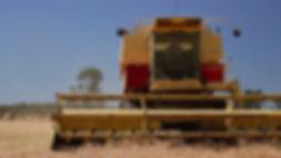 harvest scene21.jpg