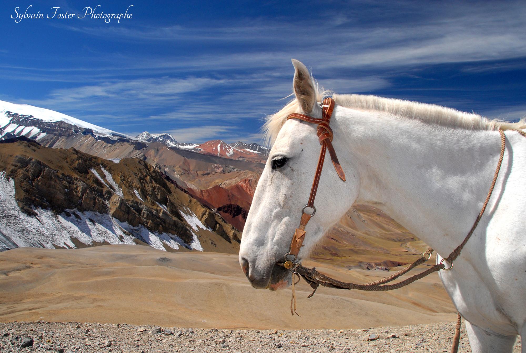 Cheval, Argentine