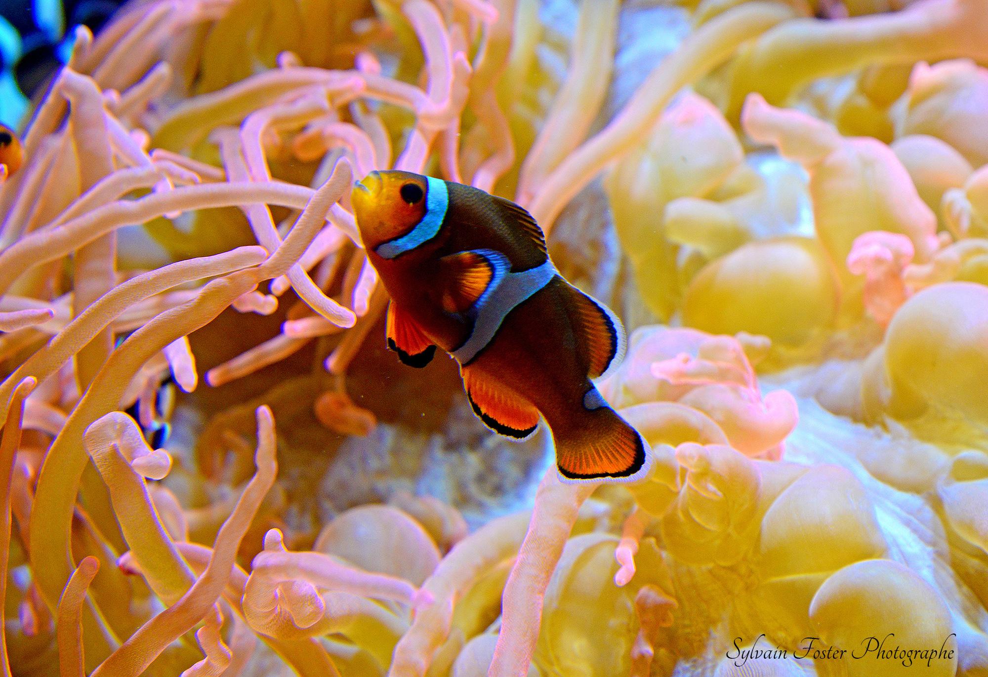 Aquarium de Monterey, Ca