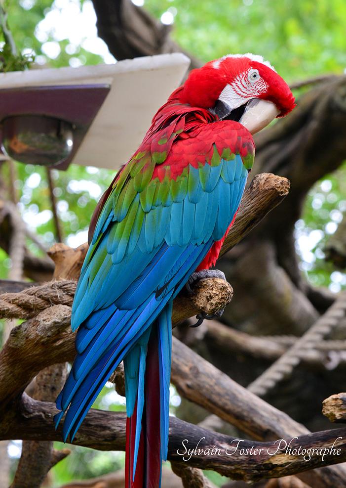 Perroquet, Disney World. FL